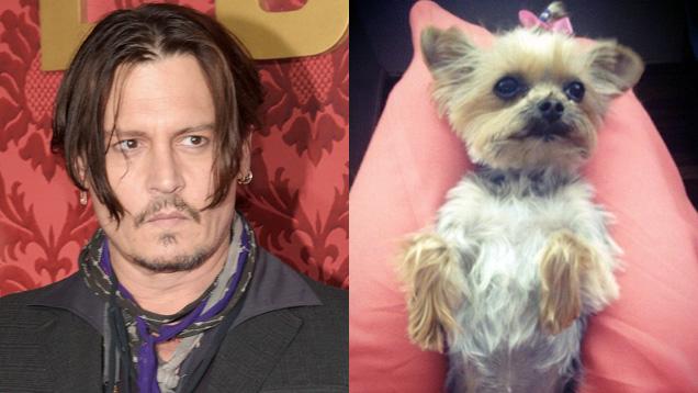 Джонни Депп и одна из его собак