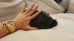Фото новой собаки Деми Ловато 20.08.2015 Инстаграм