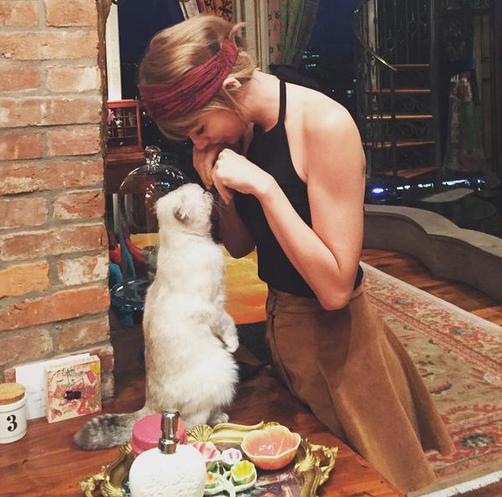 Фото Тейлор Свифт с кошкой, Инстаграм 2015
