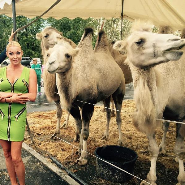 Фото Волочковой на фоне цирковых верблюдов в Нижнем Тагиле