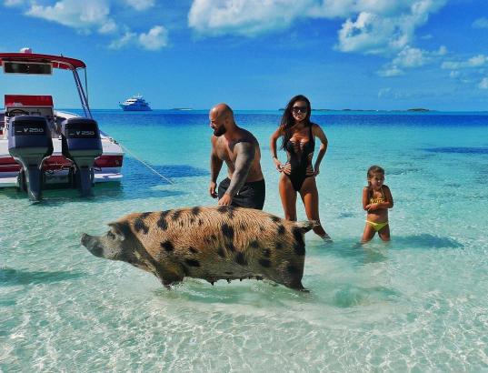 Фото Оксаны Самойловой с отдыха на Багамских отсровах в ноябре 2016: на пляже гуляют дикие свиньи