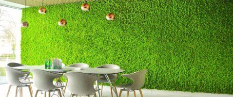Что из себя представляет стабилизированный мох?