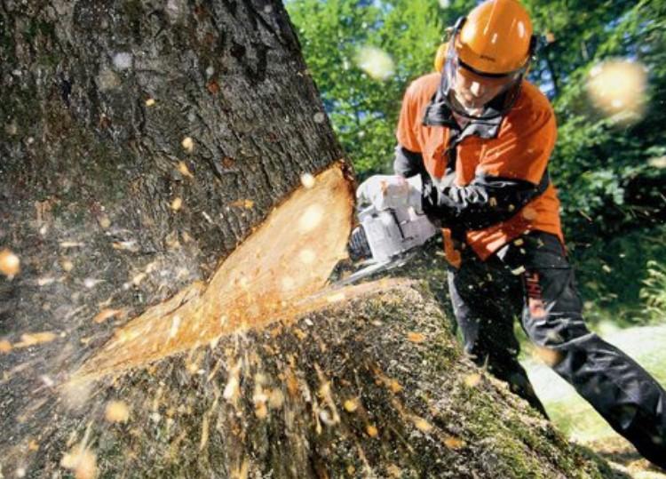 Режим быстро и без нанесения вреда среде – фирменные электропилы