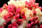 «Оптцвет» – поставки цветов оптом