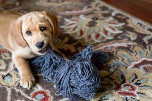 5 советов тем, кто заводит собаку